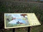 Interpretive Sign at Huichica Creek Unit