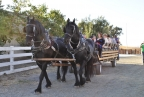 Horse-drawn wagon rides by Access Adventure