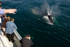 Whalewatching at Channel Islands NP. Photo by Tim Hauf