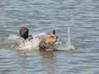 Sea Otters at Elkhorn Slough. Photo by Linda Muth: 1024x768