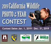 2019 California Wildlife Photo of the Year Contest