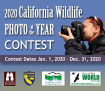 2020 California Wildlife Photo of the Year Contest